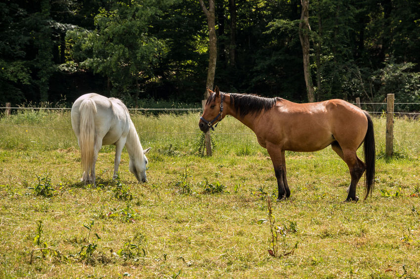 Horses on the green meadow Animal Animal Family Animal Themes Animal Wildlife Day Domestic Domestic Animals Field Grass Group Of Animals Herbivorous Horse Land Livestock Mammal Nature No People Outdoors Pets Plant Tree Two Animals Vertebrate