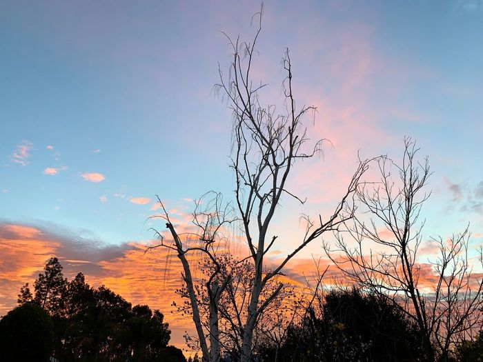 """Birch Tree Homage"" The bare branches of a birch tree pays homage to a beautiful California sunrise on an early Friday morning, first day of February 2019. Orange Sky Silhouettes Of A City Morning Light Early Morning Dawn Of A New Day Dawn Sunrise_sunsets_aroundworld Sunrise Sky Tree Cloud - Sky Beauty In Nature Silhouette Scenics - Nature"