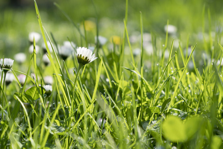 A meadow with