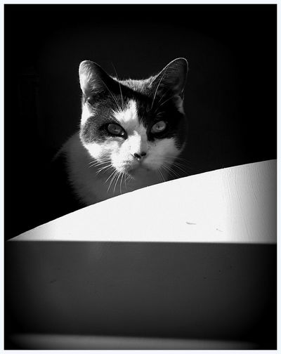 Portrait Of My Cat Cat's Face Cat's Attitude. Cat's Eyes Looking At Me Blackandwhite Photography Sunlight And Shadow Table Eye4photography  EyeEm Gallery The Week On EyeEm