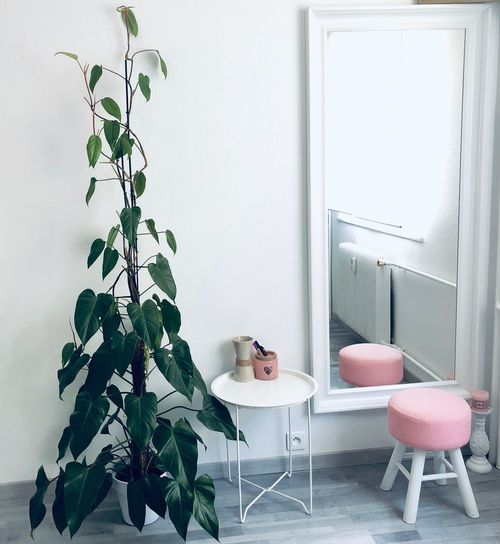 Potted plant by stool on parquet floor at home