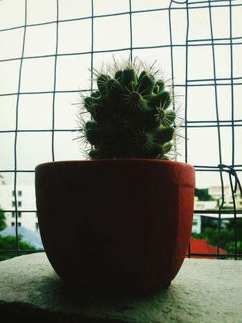 เหมือนว่าไม่ต้องดูแลมาก..แต่จริงๆแม่งโคดต้องการความใส่ใจเลย Cactus Tree Nature