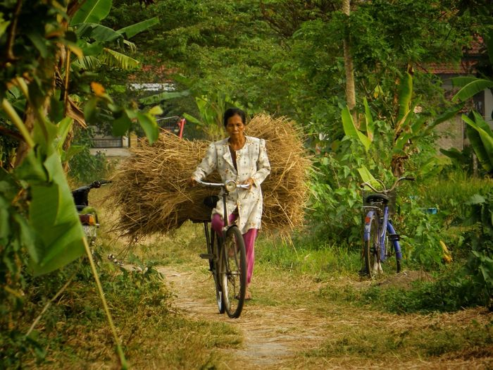 On Duty Grandma Indonesia_photography INDONESIA EyeEm Nature Lover Humanactivity Jogja This Is Aging Tree Full Length Bicycle Standing Field Agriculture Plant Growing Petal