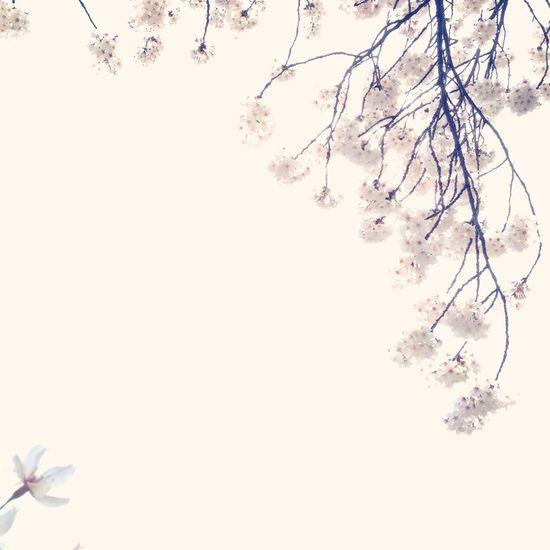 Sakura Negative