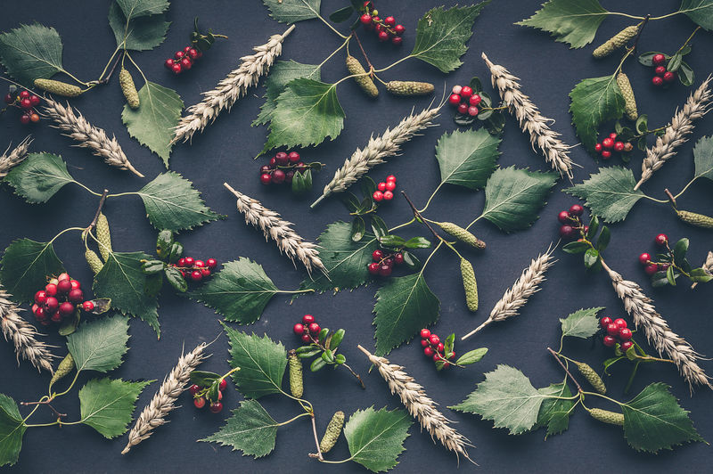 Pattern: birch