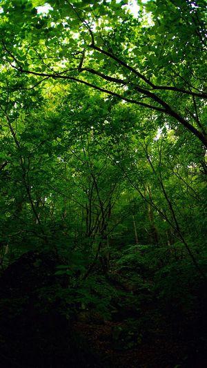 Trees Green なんか出そう EyeEm Nature Lover 葉っぱふぇち
