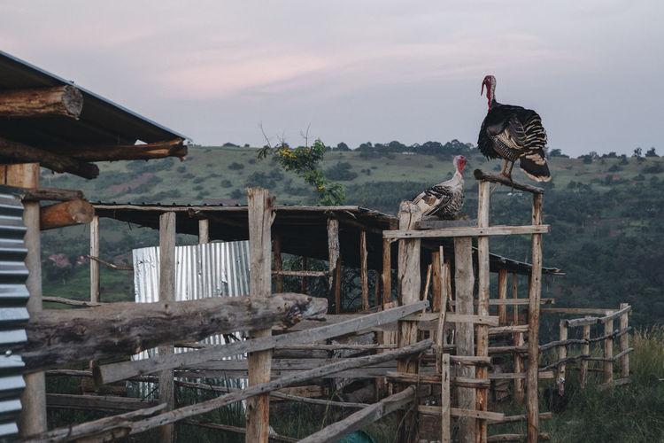 Birds perching on fence