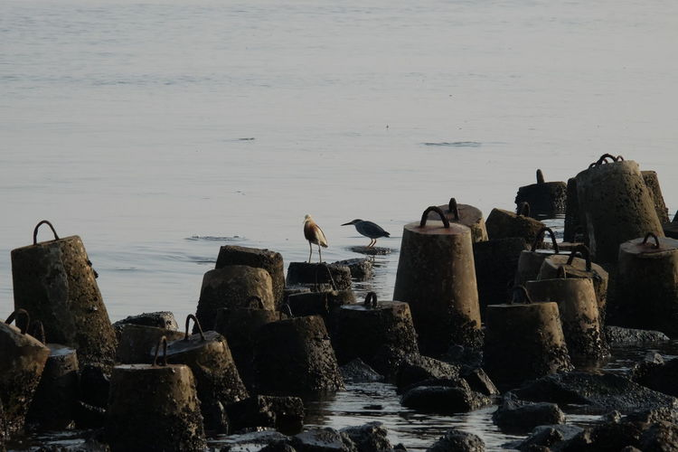 Struggling on the coast of Jakarta Coastal Areas Seagulls Coastal Life Struggle For Life Survive Animal Bird Coastal Jakarta Coastal Nature Rock Rock - Object Solid Struggle Struggling Struggling For Life Survive For Living Survivor Water