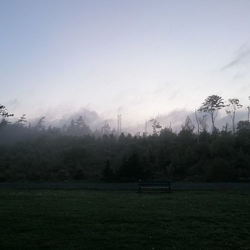 PointPlesantPark in Halofax during a heavy sea fog... Nofilter needed for this picture...