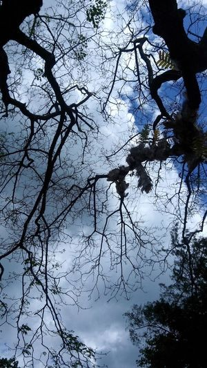 Taking Photos Hanging Out Trees And Sky Trees Tree Branches Clouds And Sky Feeling Blessed