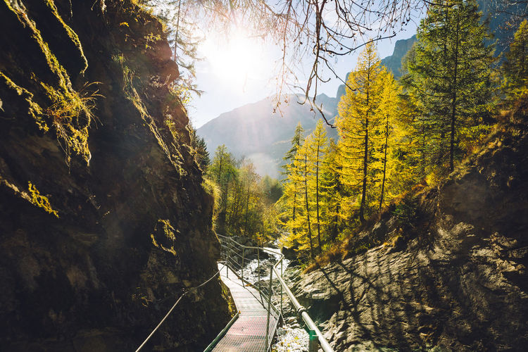 The footbridge of the Leukerbad themal springs (Dala gorge) during fall. Tree Plant Nature Sunlight Beauty In Nature Scenics - Nature Land Day Tranquility Mountain Tranquil Scene Forest Yellow Sky Outdoors Road Growth Lens Flare Track Fall Autumn Leukerbad Gorgeous