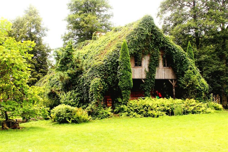 Taking Photos Check This Out Enjoying Life Hello World Building Buildingstyles Green Back To Nature Poland Mazury Masurische Seen Holiday Trees Eyem Best Shots EyeEm Nature Lover EyeEm Best Shots - Nature