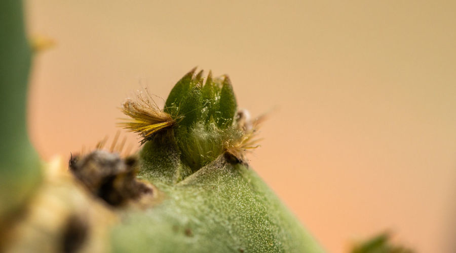 Beauty In Nature Close-up Green Color Nature Growth Day Selective Focus Copy Space No People Invertebrate Cactus Flower Plant Part
