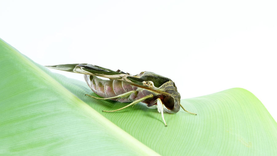 Close-up of insect over green background