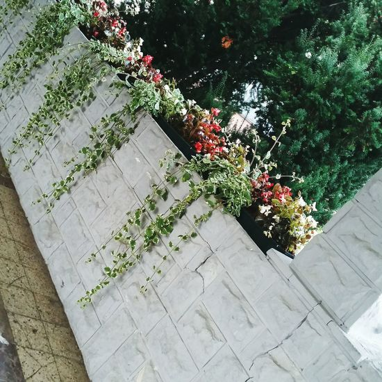 Flower High Angle View No People Growth Day Plant Outdoors Nature