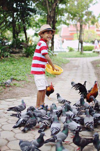 Happy Boy Feeding Pigeons On Footpath In Park