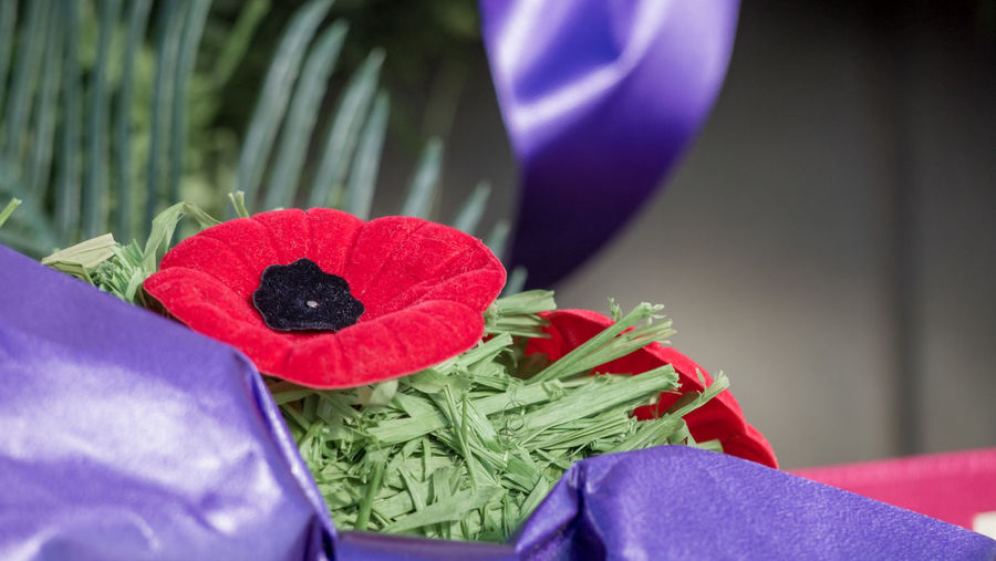 Remembrance day 2018, poppies, weapons, tight shots without identifiable people. Flower Freshness Flowering Plant Plant Close-up Red Nature Vulnerability  Fragility No People Beauty In Nature Focus On Foreground Leaf Green Color Plant Part Celebration Indoors  Purple Decoration Blue Flower Arrangement Flower Head Bouquet Bunch Of Flowers Remembrance Day Halifax, Canada Kelly Mercer Lest We Forget Poppy Military Memories Memorial Soldier White Gloves