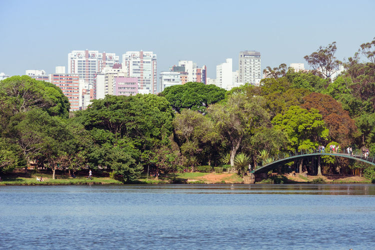 Chill afternoon in South Americas biggest urban park. parque ibirapuera, Sao Paulo, Brazil Tree Plant Nature Day Outdoors Parque Ibirapuera Sao Paulo - Brazil Urban Park Water Lake Tree Autumn Autumn colors Cityscape Skyscraper Sky Flowers Birds Nature Nature On Your Doorstep Park