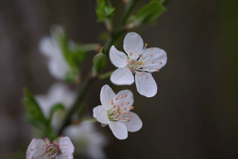 Close-up of fresh white flowers blooming outdoors