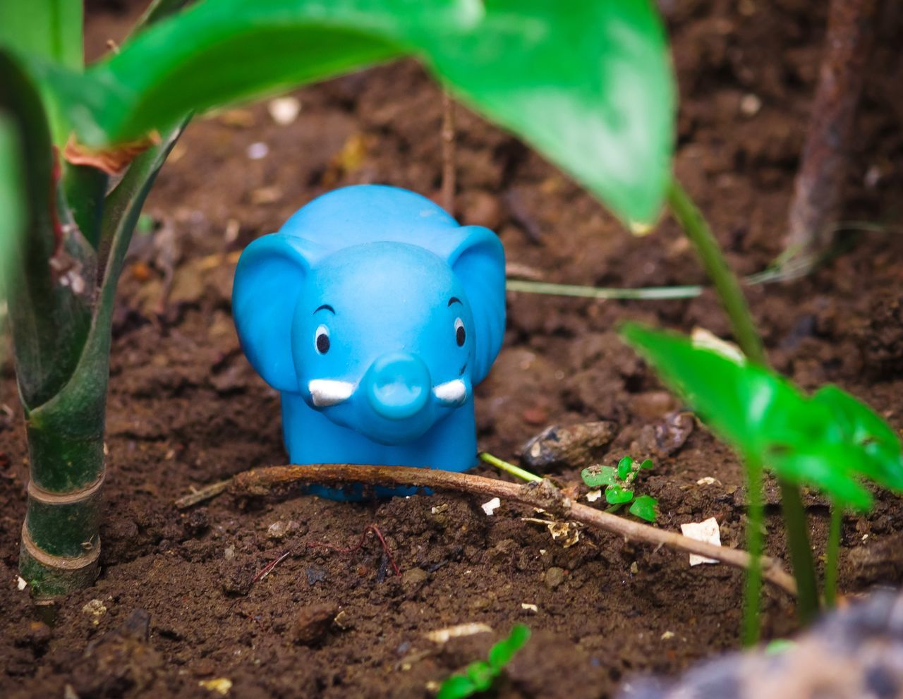 HIGH ANGLE VIEW OF SMALL BLUE TOY ON FIELD