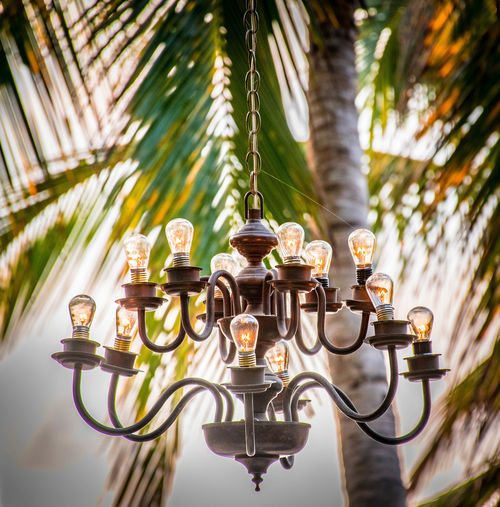 Light Palm Tree Architecture Close-up Day Decortion Evening Low Angle View No People Outdoors Palm Tree Tree