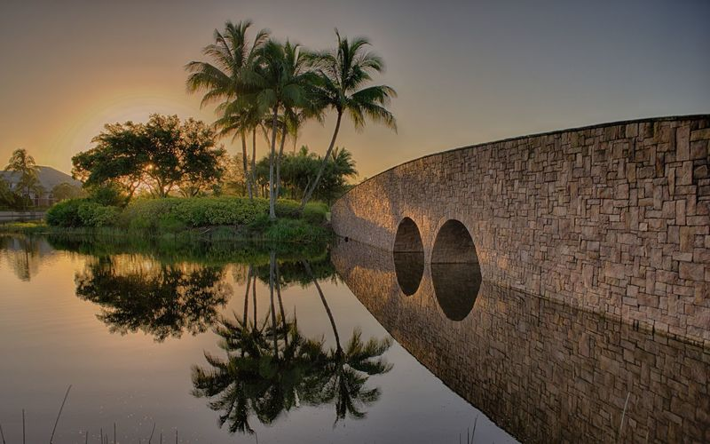 Reflection of palm tree and bridge in lake