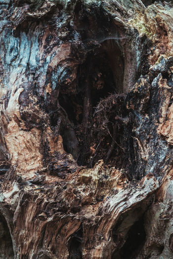 Textured  Full Frame Trunk Backgrounds Tree Trunk Rough Tree Natural Pattern Bark No People Pattern Close-up Nature Wood - Material Plant Plant Bark Growth Day Outdoors Brown Eroded