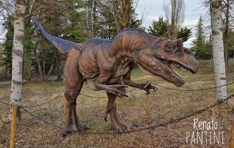 Neovenator salerii Dinosauro Dinosauri Dinosaur Dinosaurs Neovenator Theropoda Teropode DinosaursAroundTheWorld Animal Themes Dinosaurs Park Chianciano Terme