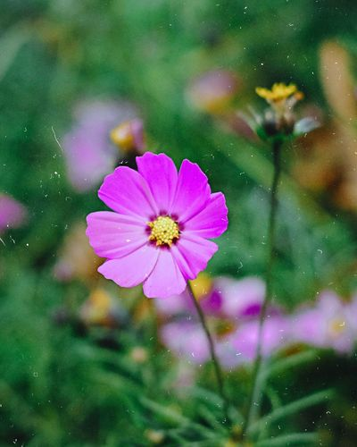 Hoa cánh bướm! Hoa Xuân Mùa Xuân Hoa Spring Flowers Spring Blossom Flowers Blooming Beauty In Nature Outdoors Plant