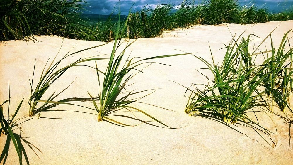 Sandy Beach Nature_collection Sea_collection Blue Sky Grass Scotland Sunny Days Seaside