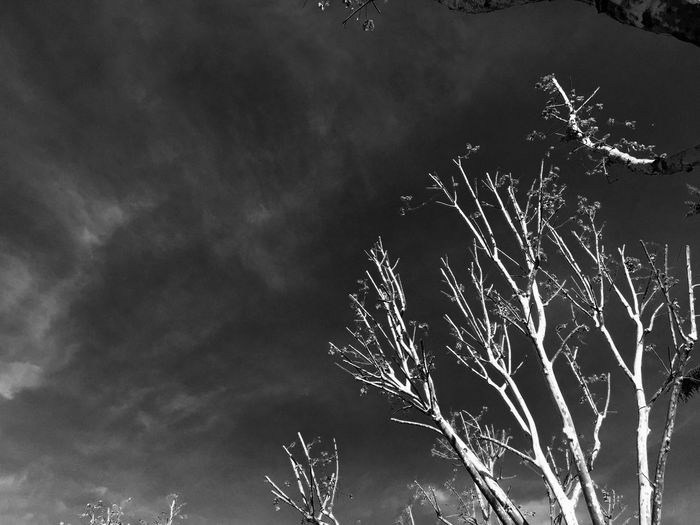 No People Nature Sky Break The Mold Tree Clouds And Sky Blackandwhite