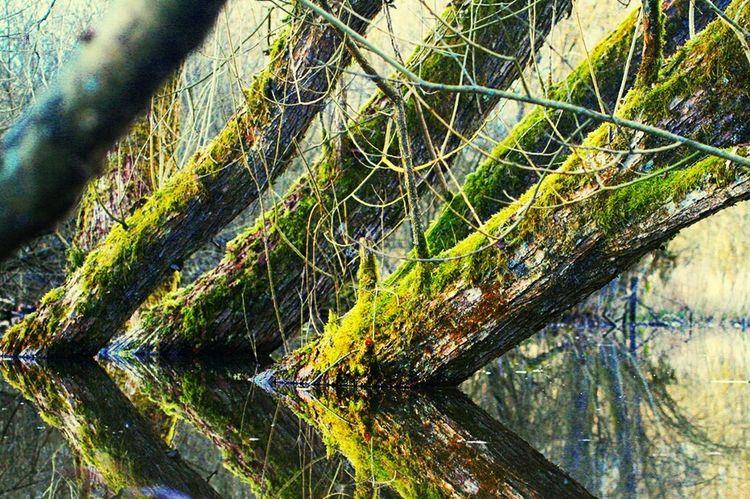 Spiegelung Wasser Baum