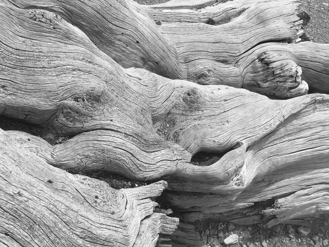 Tree Tree Trunk Tree Stump Nature Mt Charleston Las Vegas Geology Textured  Physical Geography Sandstone Rough Nature Backgrounds Pattern Beauty In Nature Landscape No People Desert Full Frame Travel Destinations Day Outdoors Arid Climate Scenics