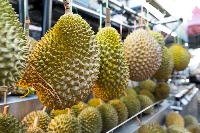 Fresh Asian Durian on hanging on display for sale at a vendors street stall. Durian Hanging Smelly Beauty In Nature Cactus Close-up Day Focus On Foreground Food Food And Drink Freshness Fruit Green Color Growth Market Stall Nature No People Outdoors Plant Smelly Fruit Spikey Thorn