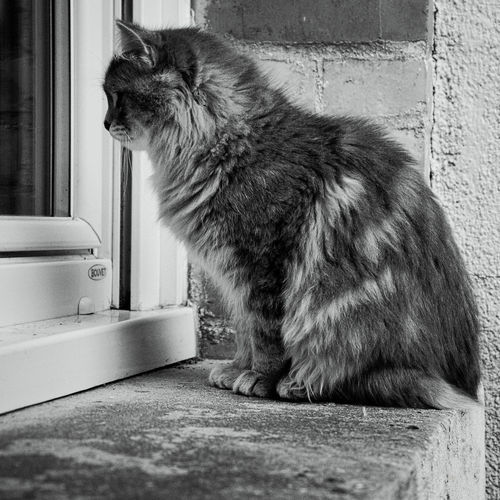 Black & White Blackandwhite Blackandwhite Photography Cat Cats Cat♡ Eye4photography  Eyem Cute Cats Eyemnaturelover