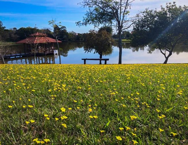 Nature Lake Grass Flowers View