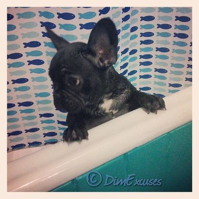 All clean. AdventuresOfMolly Frenchbulldog