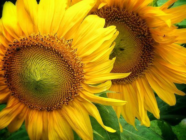 Flowers Yellow Eye 4 Nature Eye 4 Enchanting