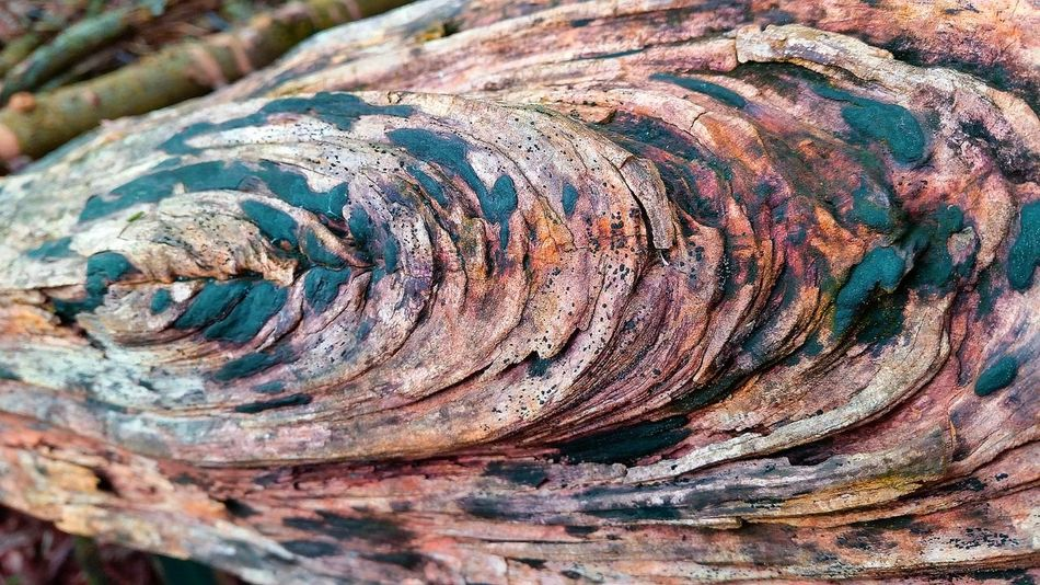 Pattern Pieces Natural Patterns Natural Beauty Pattern Patterns In Nature Wood Art Natural Colours Amazing Colors Amazing Colour Wood Colours Wooden Texture Forrest Natural Pattern
