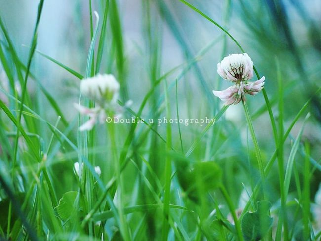 EyeEm Selects Flower Nature Fragility Growth Plant Grass Springtime Beauty In Nature Outdoors Freshness Wildflower No People Flower Head Olympus Camera