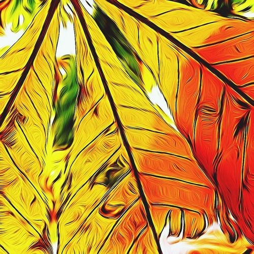 IPSPaint Colors Autumn Colors Autumn Colours EyeEm Best Shots Eye4photography  EyeEm Nature Lover Painting EyeEm Best Edits