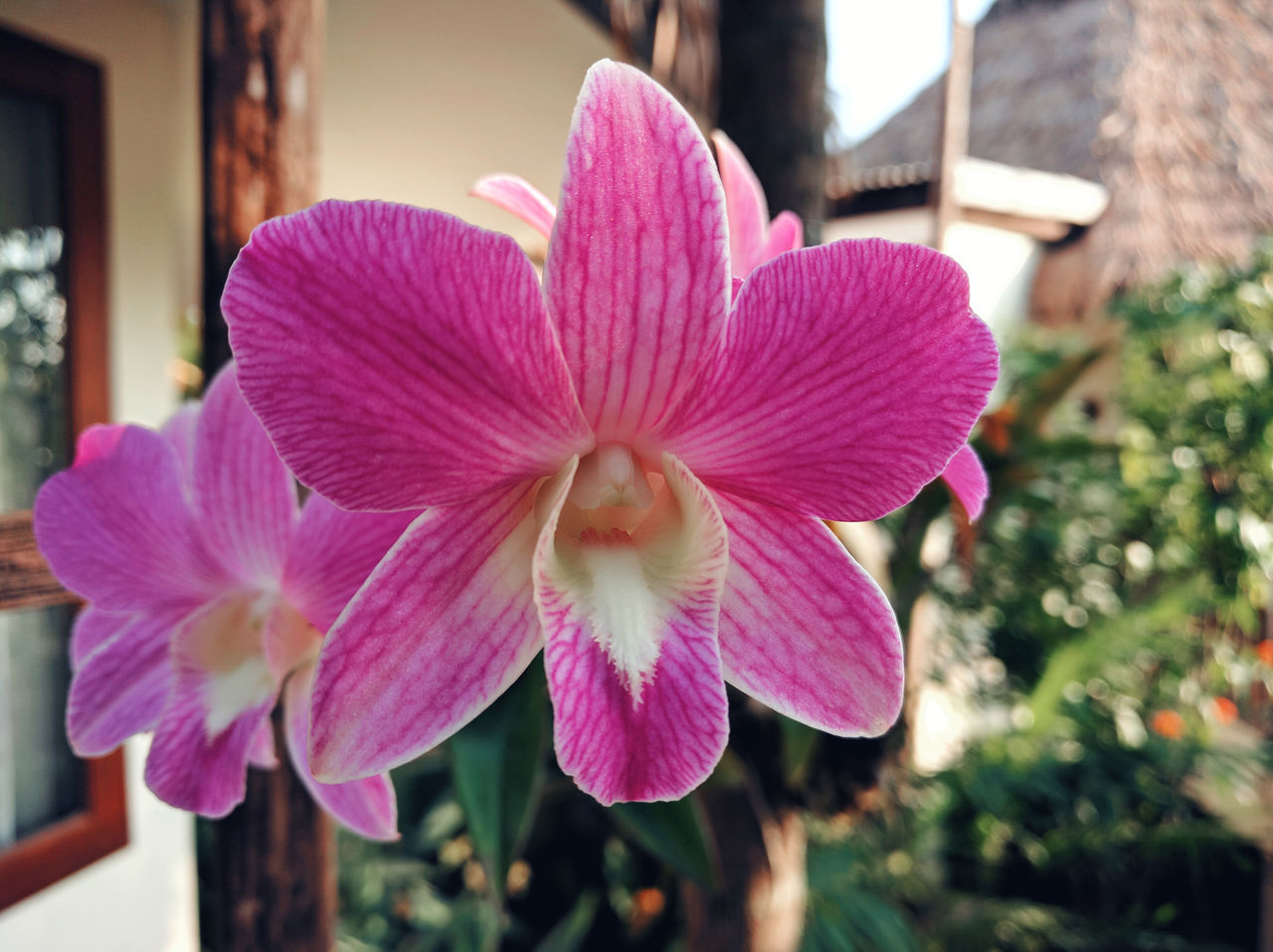 flower, focus on foreground, nature, petal, growth, plant, beauty in nature, close-up, outdoors, day, no people, pink color, blooming, fragility, flower head, architecture, freshness
