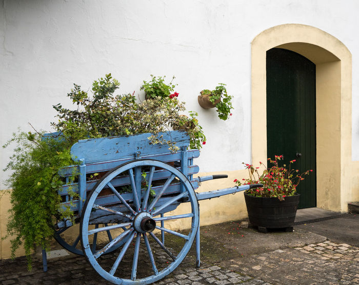 Flowers and plants in a blue painted wooden horse cart in spanish courtyard with cobblestone floor Calm European  Flower Garden Hanging Garden Painted SPAIN Spanish Blooms Blue Cart Cobblestone Cobblestones Courtyard  Decoration Door Flower Cart Flower Pot Flowers Nobody Peaceful Potted Plant Traditional Wheel Wooden Wooden Cart