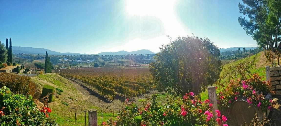 Exploring New Ground the wine country, Temecula, CA Taking Photos Winecountry Landscape On Vacation Winery Sunny Day