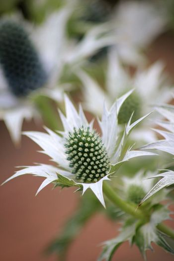 Close-up of spikey flower