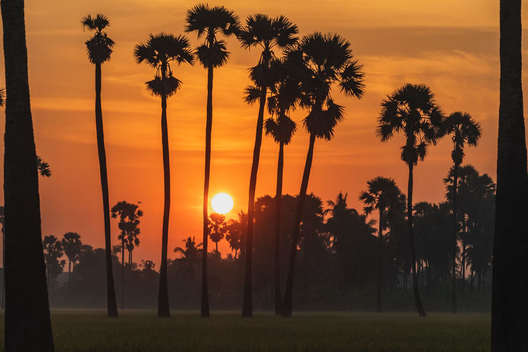 Sunrise at Dong Tan, Pathum Thani Sunset Sky Tree Plant Beauty In Nature Orange Color Scenics - Nature Tranquil Scene Silhouette Sun Palm Tree Tranquility Tropical Climate Nature Growth Land Sunlight Idyllic Field No People Outdoors Coconut Palm Tree