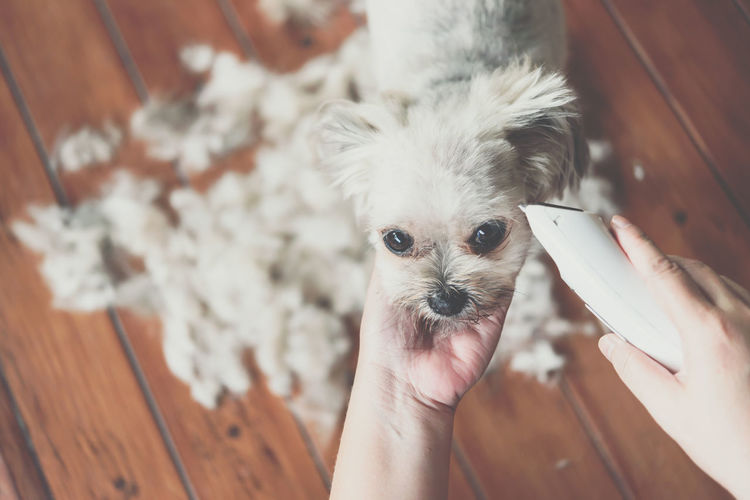 Cropped hands cutting hair of dog