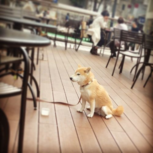 Day Deck Dog