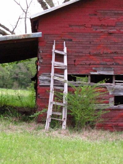 ladder on red