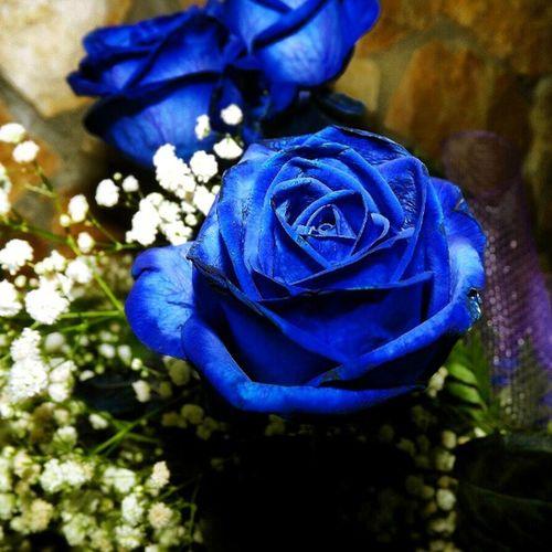 Basta solo una rosa per rendere felice una donna. :) Rosablu Bellezza Profumo Intenso